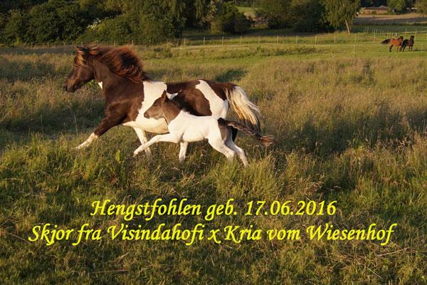 Hengstfohlen_Kria_600x40.jpg